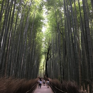 初秋の京都女子旅~観光編~♪