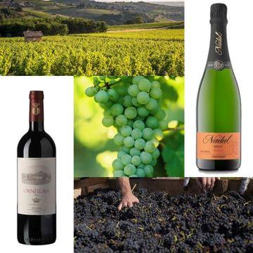 【贅沢な大人のワイン】プロが選ぶ「最強ワインリスト」美味しいワインが飲みたい!