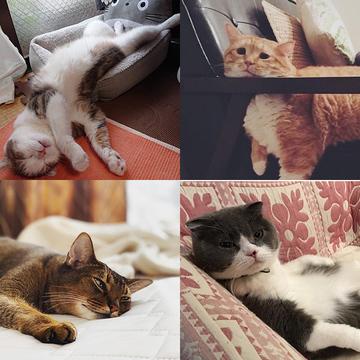 【にゃんスタ厳選集】心ほぐれる脱力感!猫たちのだら~んショット