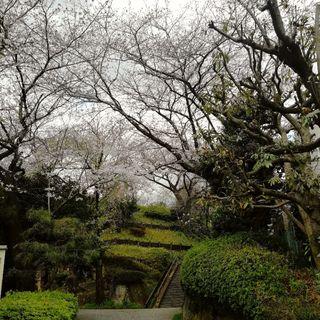 目黒川の桜はもう少し!_1_2-1