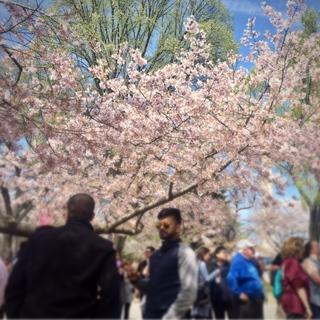 桜を楽しむ人たち。