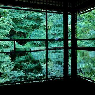 6月の京都。青紅葉、苔庭、紫陽花。