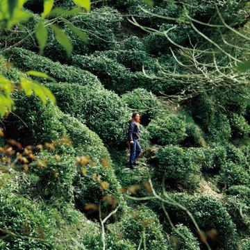 自生する茶樹を香り高く仕上げたこだわりのお茶『国友農園』【有元葉子、美味しいものは高知にあり】
