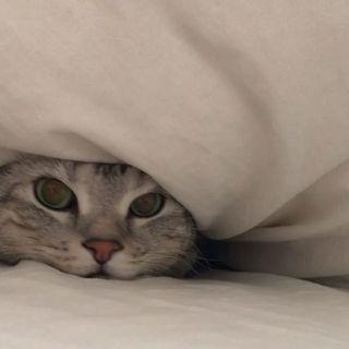 お客さんが来たから、隠れにゃくちゃ!