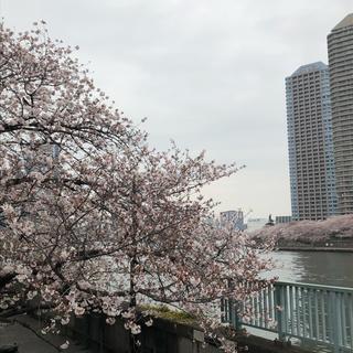 桜と小バラと手作りマスク。