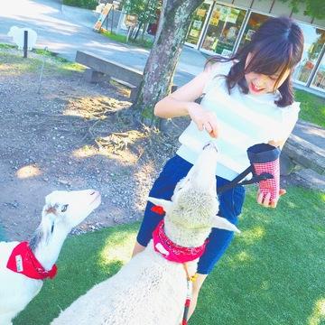 動物好きさん必見!夏は伊香保で羊とお散歩しちゃおう♩