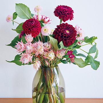 秋の日常に華やかさを添えてくれる「ダリア」【花生師・岡本典子さんに習う花の楽しみ方】