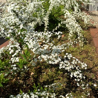 花を飾って春を取り入れる_1_4