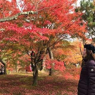 「紅葉にパワースポット。絶景!東福寺と女性の願いを叶える泉涌寺の楊貴妃観音」