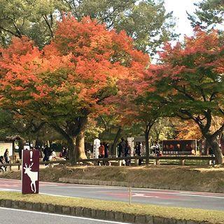 奈良の宝は、鹿と仏像のみならず。