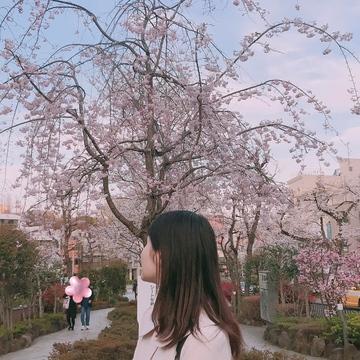 【お花見ならココ?】池袋から5分?!ドラマロケ地にもなった桜並木!!
