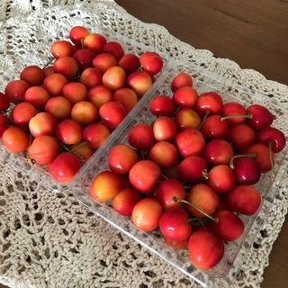 今年もやってきた美味しい果実。