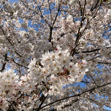 春の揺れスカート_1_4