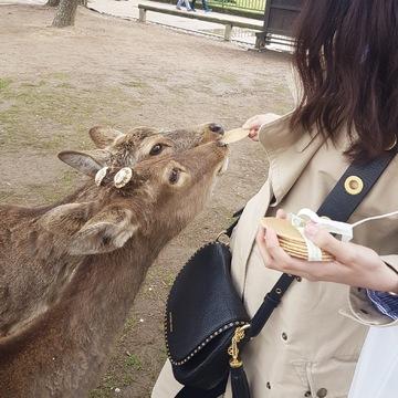 奈良の鹿と触れ合って来ました…!