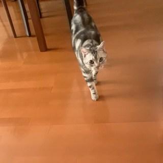 「おか〜ん!」としゃべる猫