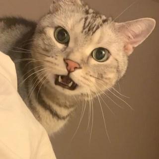 猫が飼い主を叱りつける件