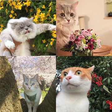 【にゃんスタ厳選集】美しい草花と猫の2ショット!目の保養にいかが?