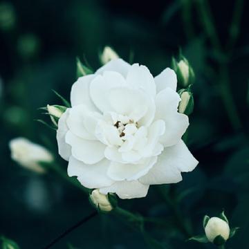"""センスがいい花好きがレコメンド""""日本全国、憧れの薔薇園3"""""""