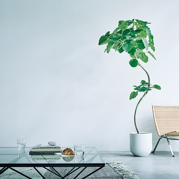 【インテリアに必要な癒し空間】毎日観察することで元気になれる「グリーンのある暮らし」