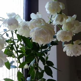 花のある暮らしから緑のある暮らし_1_2