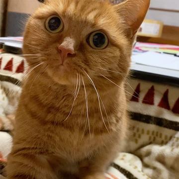 【にゃんスタ厳選集】ずっと見続けていられる!猫たちのおもしろ&癒やし動画まとめ