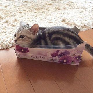 子猫のころから箱がスキ!
