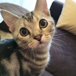 おめめ、まんまる! 子猫時代のアラン