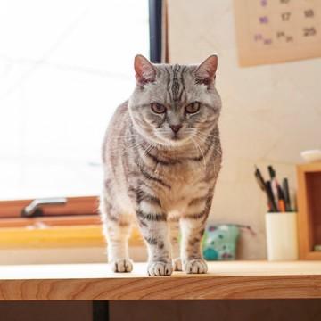 【あの人の溺愛ねこ図鑑 第6回】角田光代さんの愛猫はひそかに甘えん坊なトト