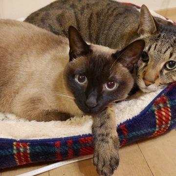 大好き!ペット⑦青空生活の猫兄妹。息子の号泣で家族に