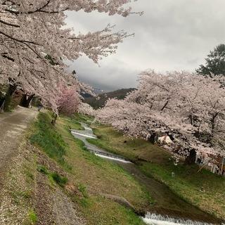 福島県でおすすめの『桜の名所』②