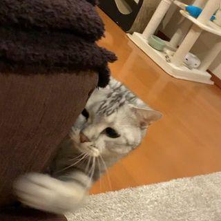 猫パンチ(動画)
