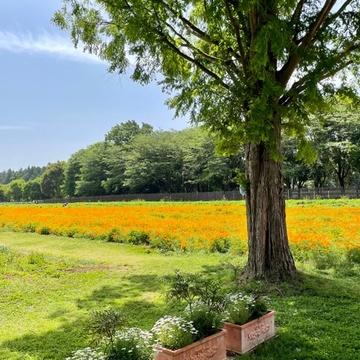 茨城の自然が楽しめる素敵な場所へ_1_2