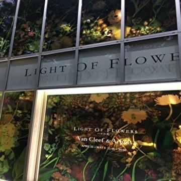 LIGHT OF FLOWERS ハナの光