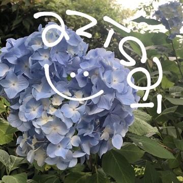 紫陽花ならここ!!関東のオオスメスポット☺︎