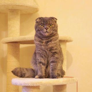 猫宅紀行、知らない町へのお出かけ。