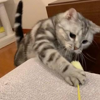 猫じゃらしでエキサイト!