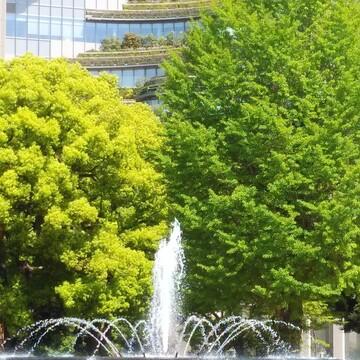 新緑と初夏の光を浴びて…