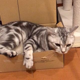 お気に入りの箱に入っていたら、あっ!