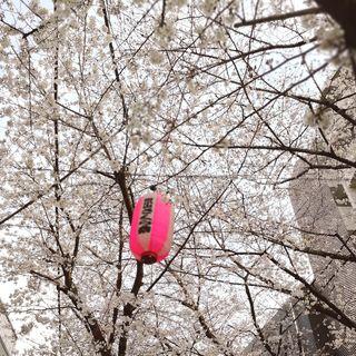 目黒川の桜はもう少し!_1_3-1