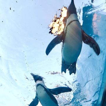 Vol.24♡ 世界初!空飛ぶペンギン?!【池袋・サンシャイン水族館】