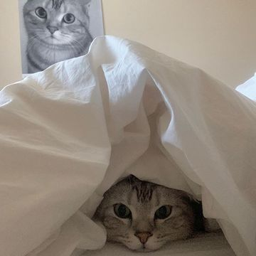 ママに甘える姿がとってもキュート!編集長の愛猫・アランの「人気癒やし動画」【月間ランキングTOP10】