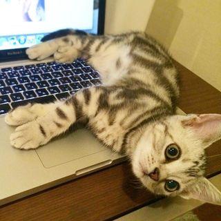 猫あるある。パソコン作業の邪魔をする