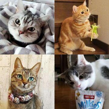 【にゃんスタ厳選集】猫たちがとびきり可愛いショットで、お気に入りグッズをご紹介♪