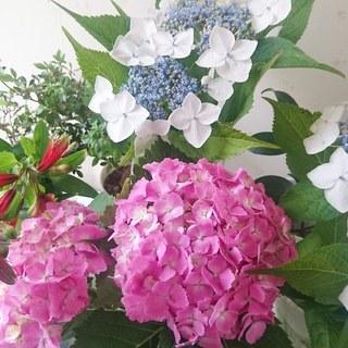 私のお花LIFE