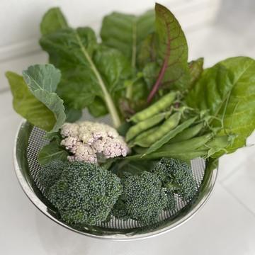 お野菜を育てて、お家時間を楽しんでいます!
