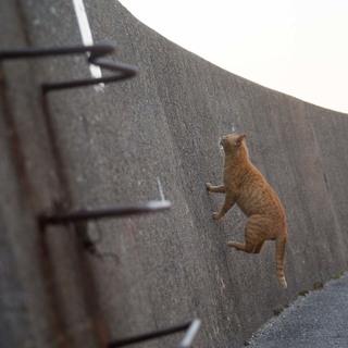 にゃんとしても壁を越えろ!【水曜日のねこたちへ #36】