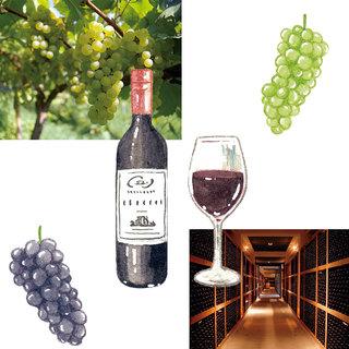 【ニッポンのワイン】造り手の想いやストーリーを知ってワイナリーを選べばもっと楽しい