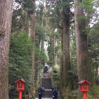 箱根神社とお参りのあとのお楽しみをご紹介します