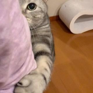 リモートワークと猫