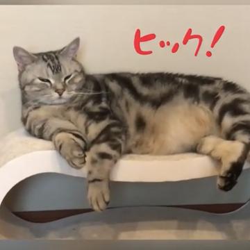しゃっくりする猫⁉︎動画